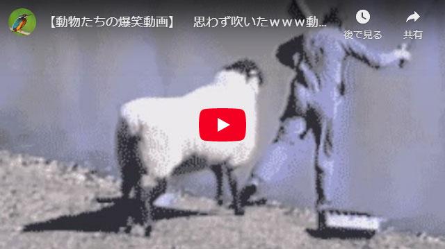 爆笑面白動画第一弾。動物で和みましょう!