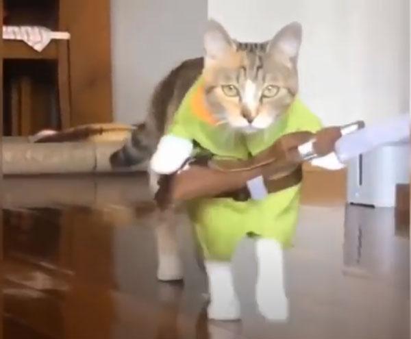 爆笑!可愛い猫ちゃん動画!