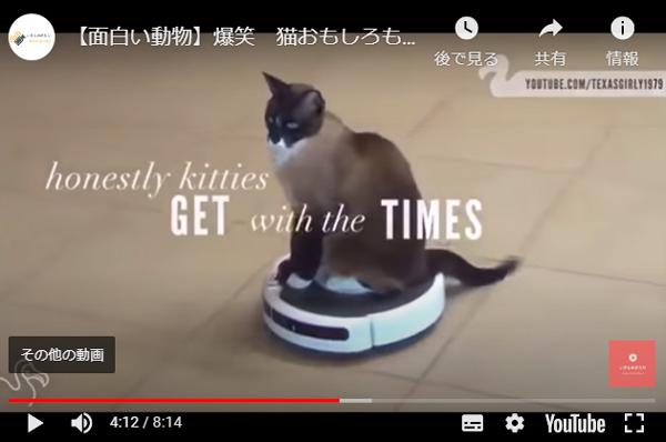 爆笑動画。動物(ネコちゃん)編