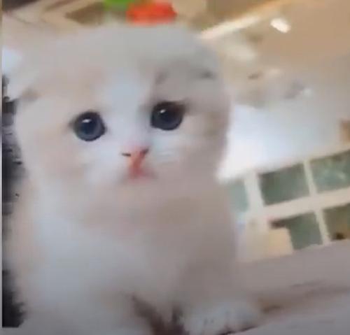 可愛いネコちゃんの爆笑動画