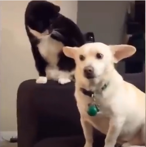 色んな動物の爆笑動画!