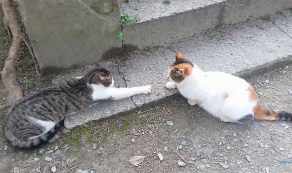 癒し猫ちゃん動画!爆笑も!